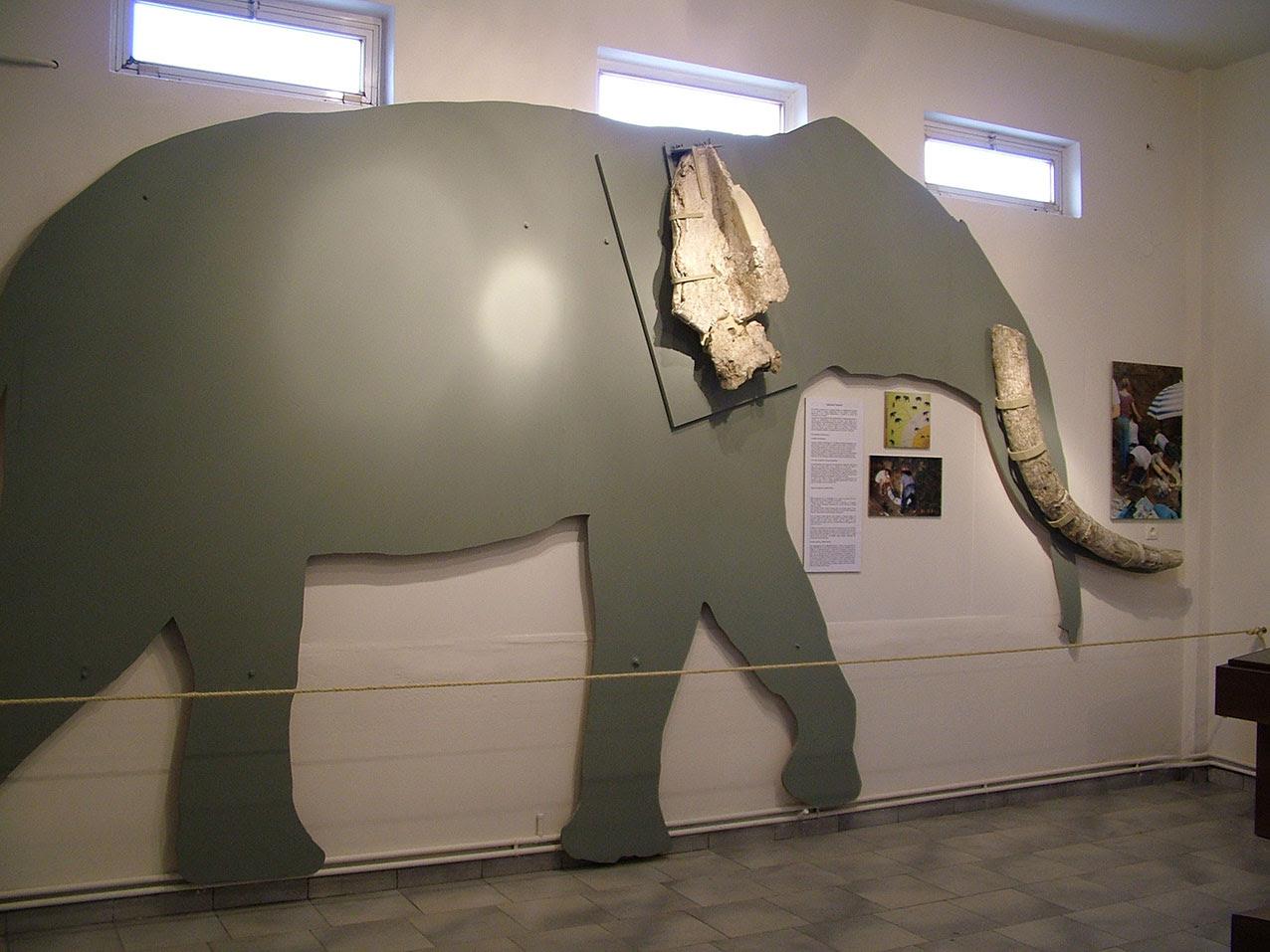 Άποψη της έκθεσης στο Μουσείο Απολιθωμάτων Θηλαστικών στην Κερασιά (φωτ. ΑΠΕ-ΜΠΕ).