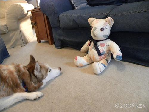 DSCN2276 Zim watches the Bear 2