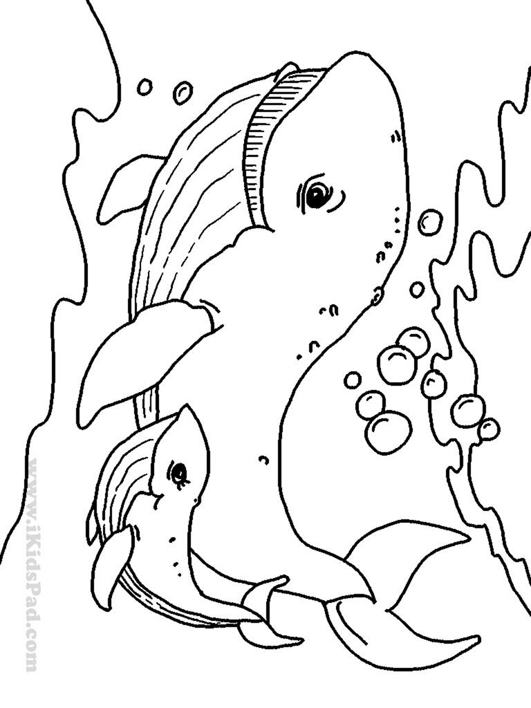 Sea Creatures Drawing at GetDrawings | Free download