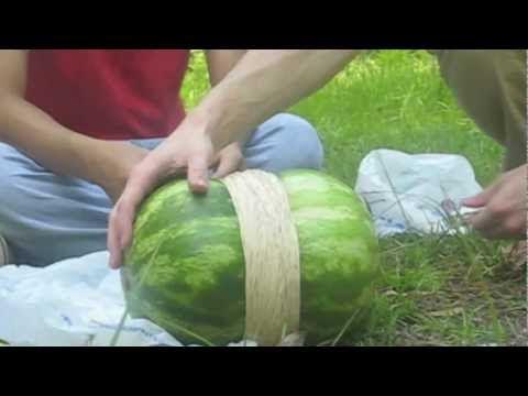 video que muestra que pasa si le pones 50 Gomas en una Sandia