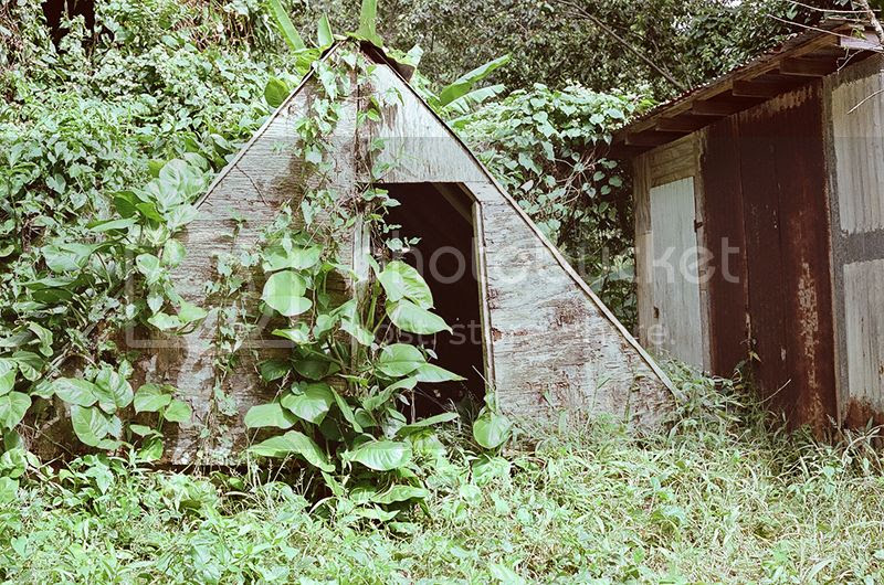 35mm, bamboo, Beach, Contax G2, Film, Holiday, Kain Mellowship, Mountains, Ocean, Palm trees, Photography, Puerto Rico, river, Surf, Travel, Tropical, vacation, Waterfall photo 20hut_zps15eqzowk.jpg