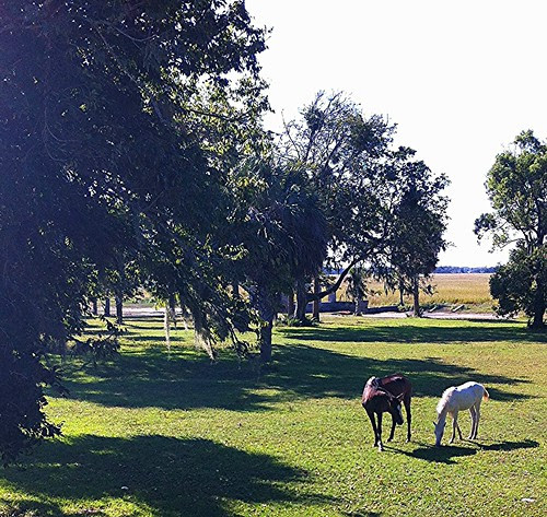 wild horses, Cumberland Island.