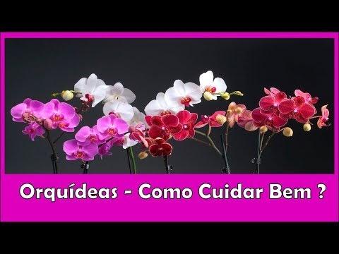 ORQUÍDEAS COMO CUIDAR BEM DESTA PLANTA