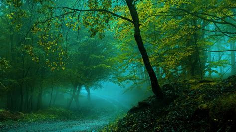 wallpaper spring forest pathway fog  nature  popular  wallpaper  iphone