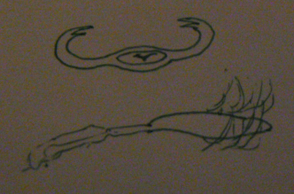 Il testimone fornito questa illustrazione per mostrare come l'oggetto guardato da due prospettive diverse - come un oggetto a forma di boomerang, e dal lato - come (Credit: MUFON) 'creatura'.