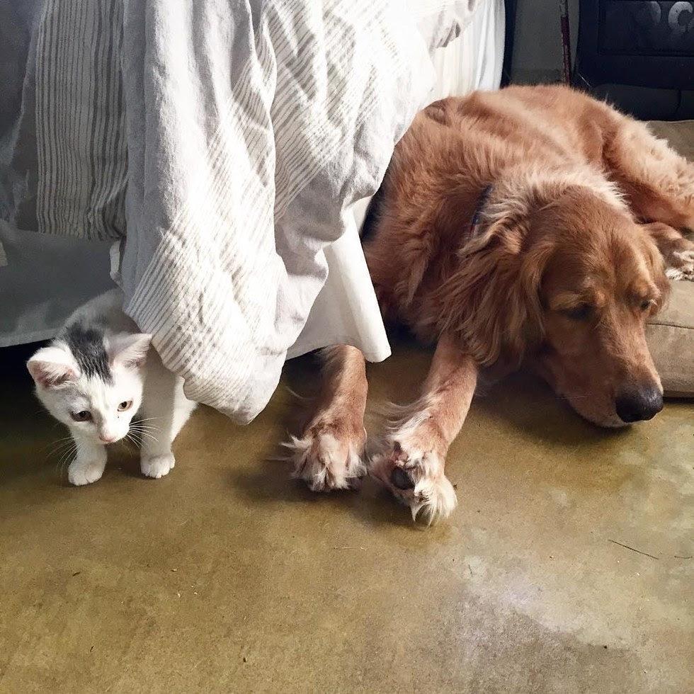 σκυλίτσα γατάκι