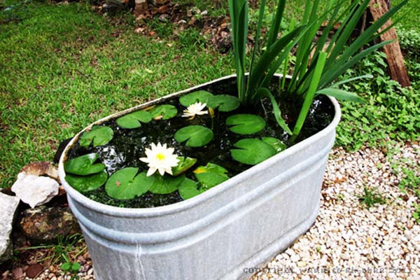 AD-Mini-Pond-In-A-Pot-13