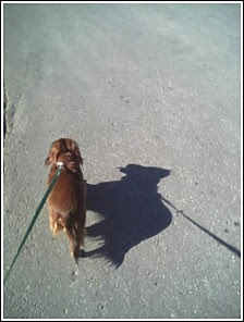 shadow_barry1