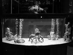 fish flying over aquarium
