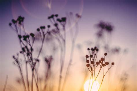 gratis billeder natur graes afdeling blomst plante
