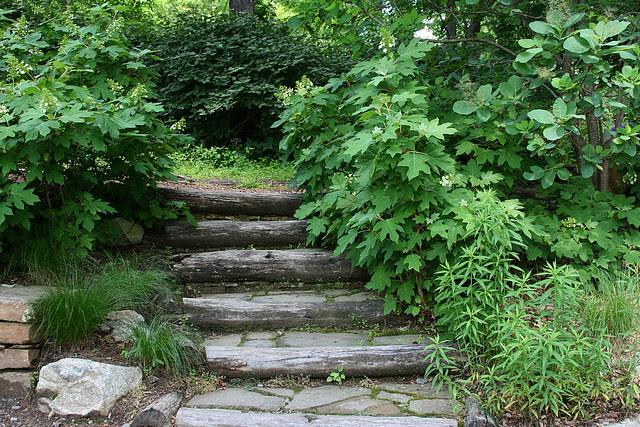 17_hydrangea_steps
