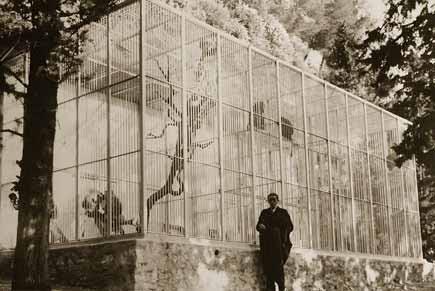 gabbie scimmie di Voronoff