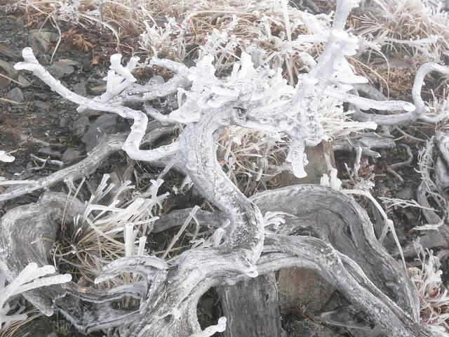 雪山主峰路上的植物,都已經結冰了
