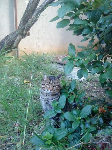 mačak by XVII iz Splita
