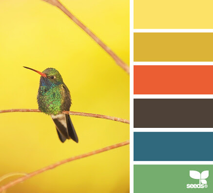 HummingbirdHues