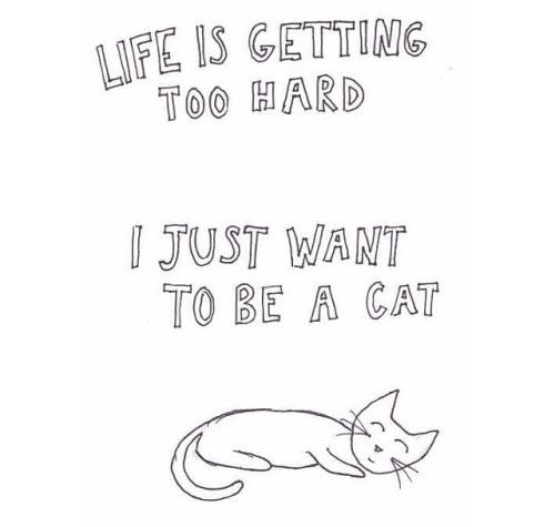 Kitty Cat Cute Black And White Life Quotes Hipster Cats Grunge