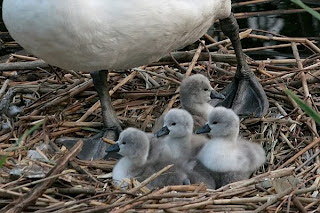 I piccoli al nido