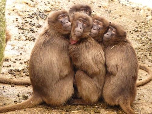 बंदर और ऊंट-The Monkey And The Camel