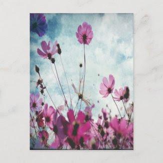 Visions In Pink Floral Design postcard
