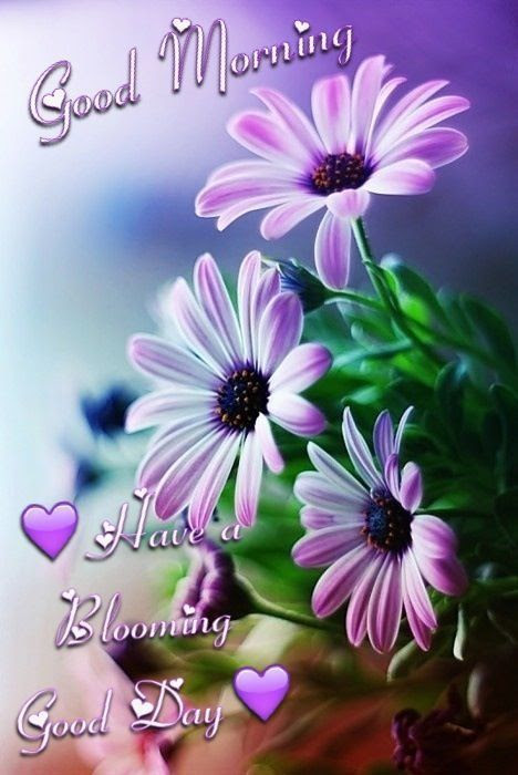 Good Morning Have A Blooming Good Day Pictures Photos And Images