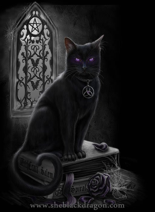 witches black cat da