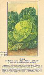 legume27 chou
