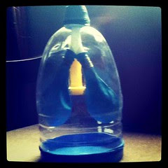 5th Grade Science project: Lung model