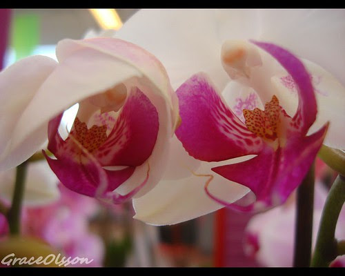 Orchid in the morning...
