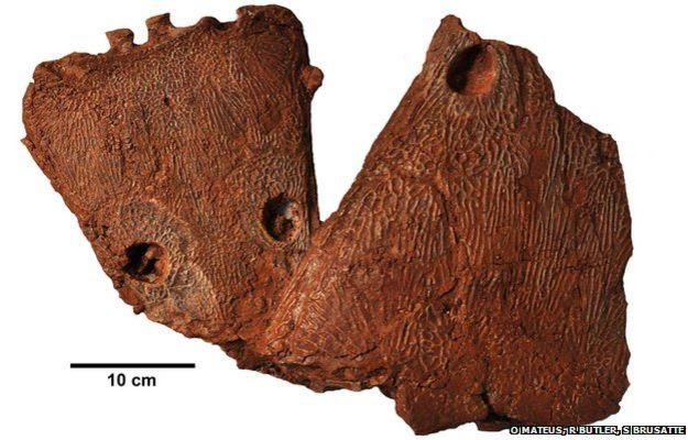 metoposaurus skulls