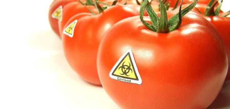 gmo_tomatoes_toxic_735_460