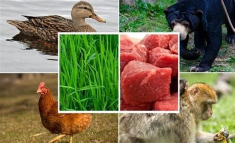 hewan omnivora pengertian ciri adaptasi keuntungan