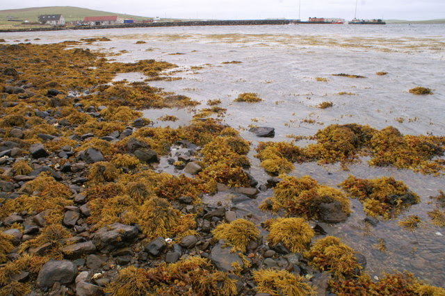 File:Autumnal shore of Baltasound voe - geograph.org.uk - 1507663.jpg