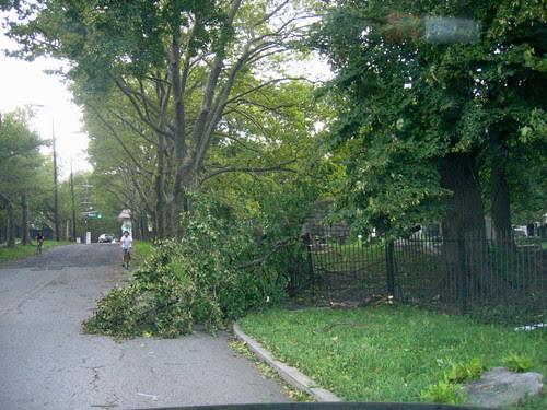 Fallen tree, after Irene