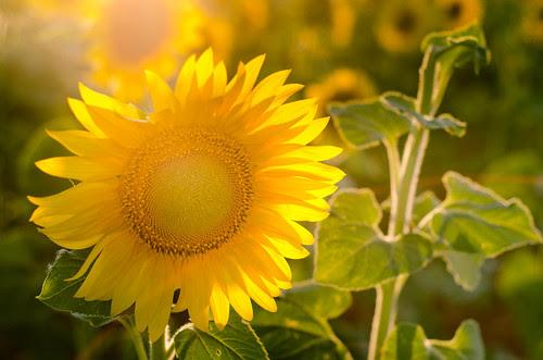 Sol (gira)