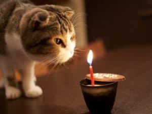 Lindo gato en su cumpleaños