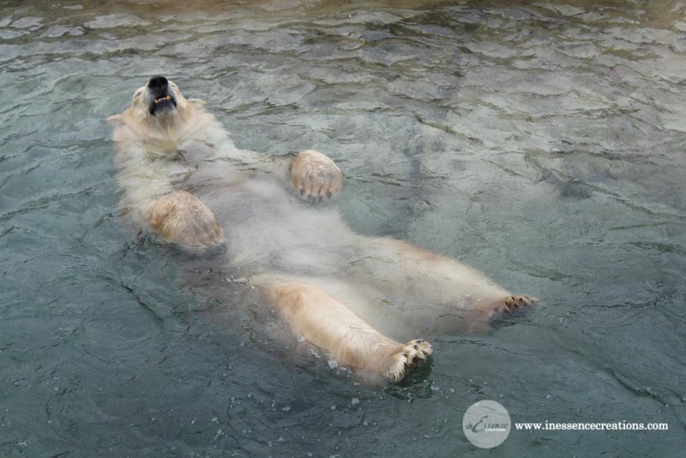 Polar Bear - Toronto Zoo, Ontario, Canada