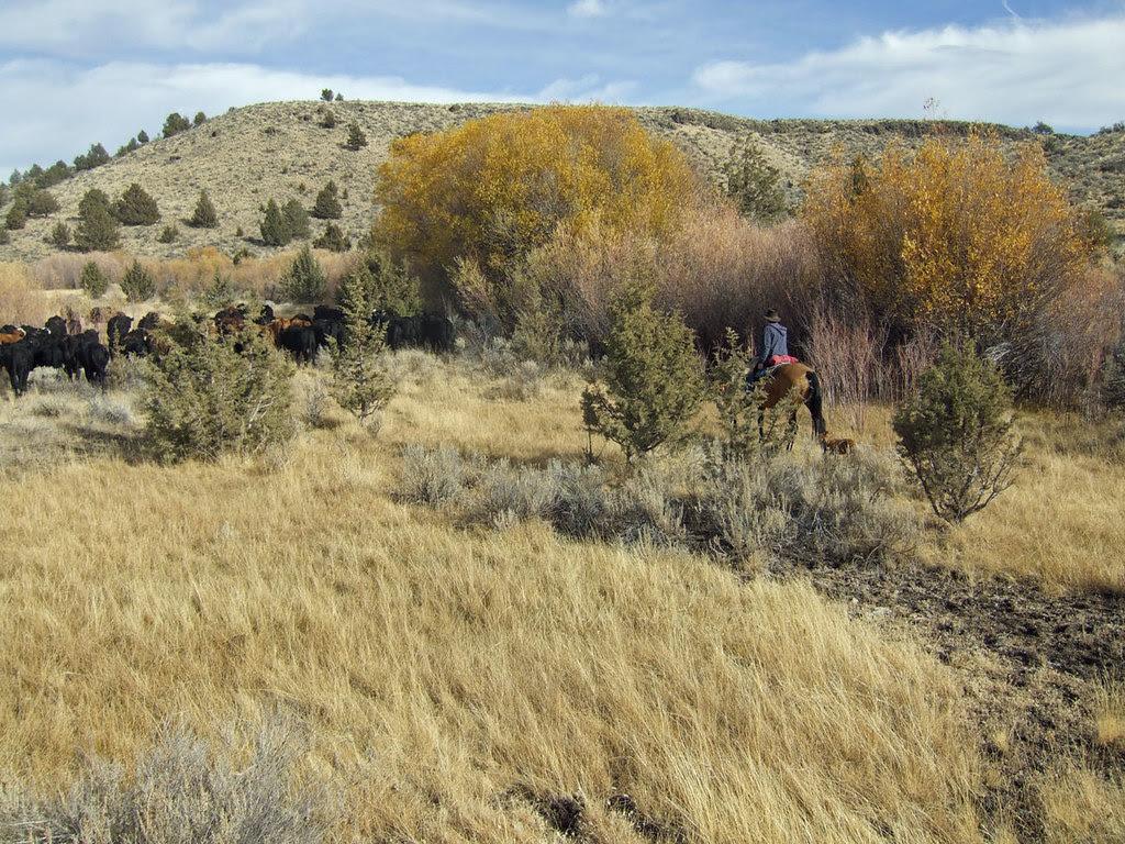 Grassy Lowlands