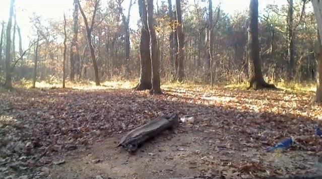 Wildlife deer cam Minnesota