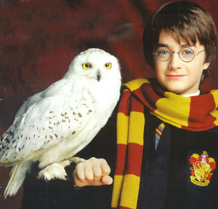 Hedwig el Búho