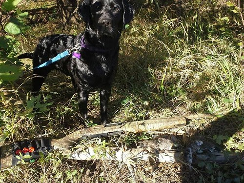 Belle's first hunt