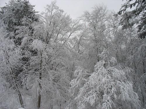 snowy14Jan08-8317