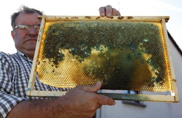 Μέλισσες παράγουν χρωματιστό μέλι (9)