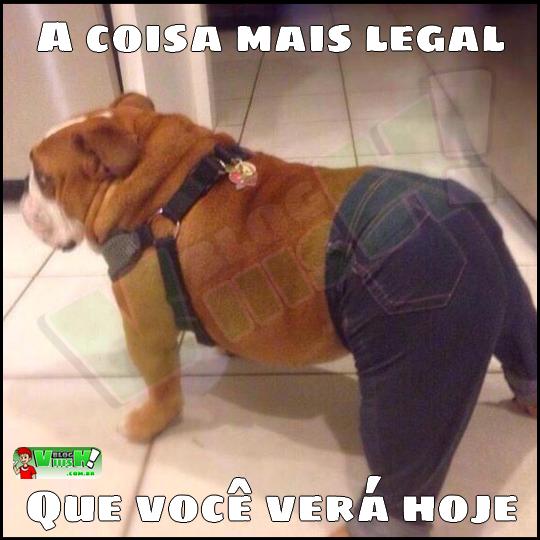 Blog Viiish - Clóvis, o cão na estirpe