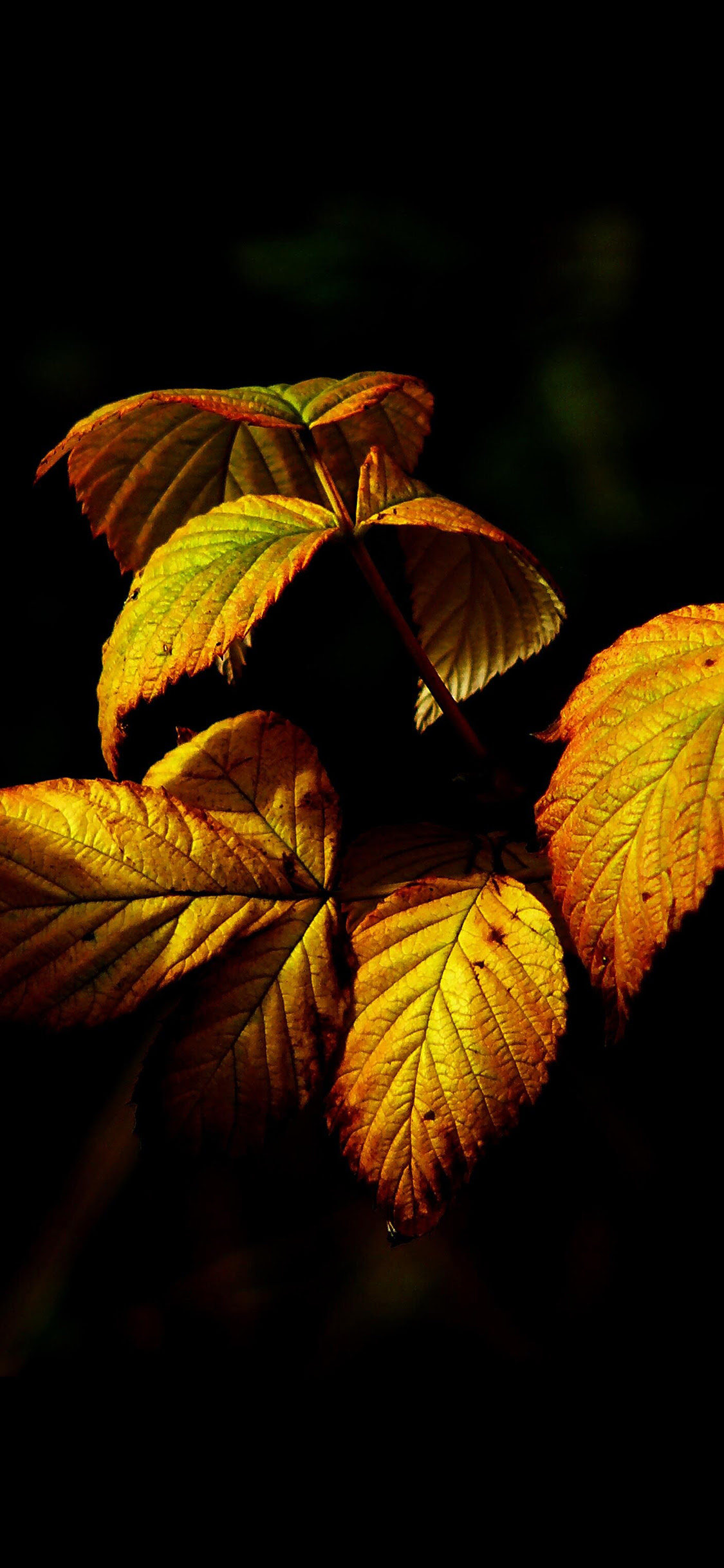 18 Dark Autumn Iphone Wallpaper Basty Wallpaper