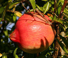 Click Here for pomegranate health