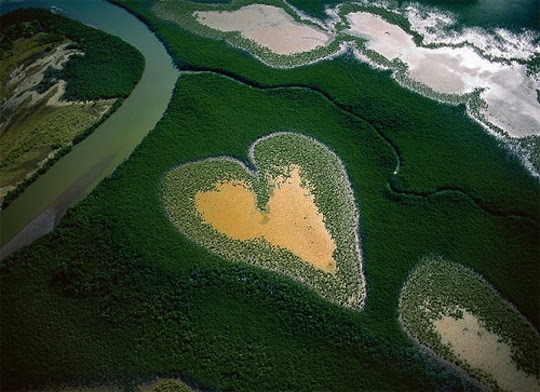 aerial, forest, heart, heart-shaped, photography