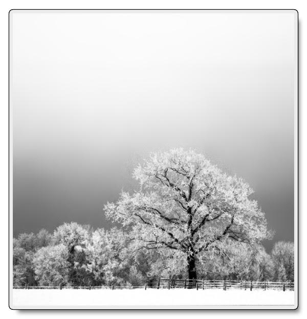Snöträd