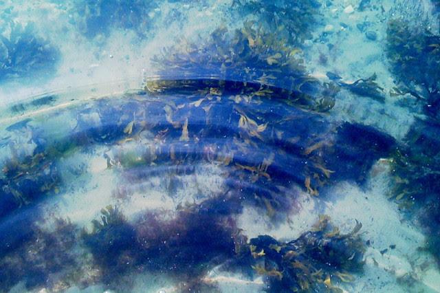 havsbotten