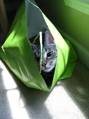 Maggie in the gift bag