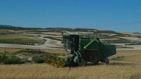 A combine harvester in a wheat field